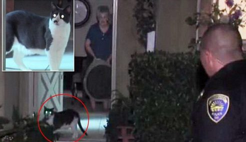 Dua Beranak Jadi 'Tebusan' Kucing Peliharaan!