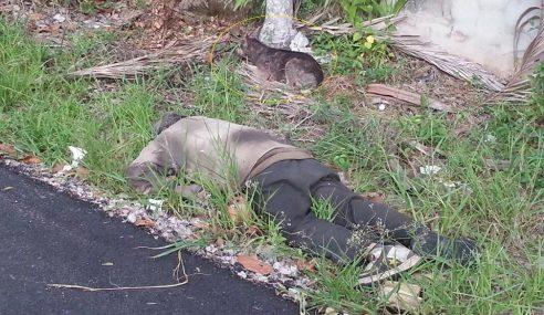 Anjing Setia Temani Tuannya Yang Mati Di Kluang…