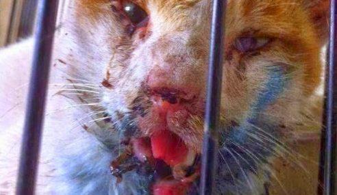 Kejam! Mulut Kucing Hancur Dipukul Hanya Kerana Curi Ikan