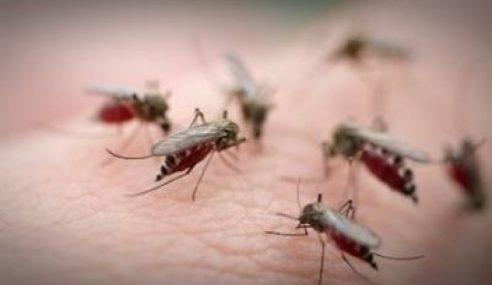 UNIMAP Cipta Peranti Kesan Nyamuk Aedes