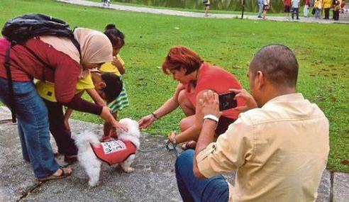 Program ' I Want To Touch A Dog' Tak Boleh Berulang