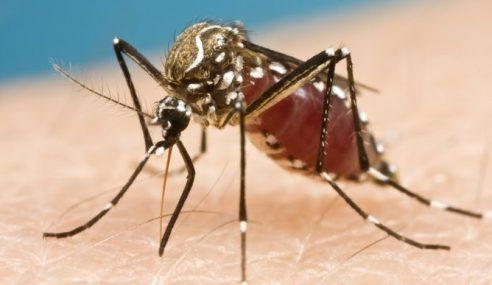Mesti Baca: Ketahuilah, Aedes Lebih Bahaya Dari Anda Sangka!
