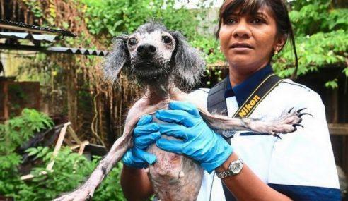 KEJAM!! Ini Kes Penderaan Haiwan Paling Teruk Di Negara Ini