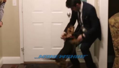 VIDEO: Syahdu, Reaksi Anjing Lepas 2 Tahun Tak Jumpa Tuan
