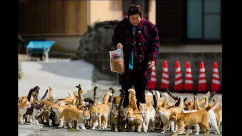 Dewan Rakyat Lulus Rang Undang-Undang Kebajikan Haiwan