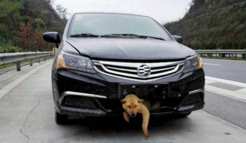 Kesian.. Anjing Tersepit Kat Bumper Kereta Sejauh 248KM