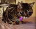 Kucing Mata 'Alien' Ada 30,000 Pengikut Instagram