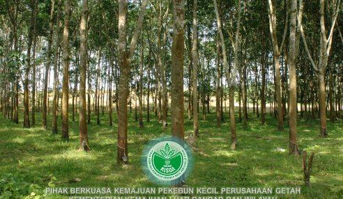 Risda Peruntuk RM69 Juta Jayakan Transformasi