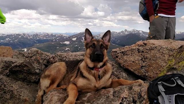 Anjing Selamatkan Nyawa Tuan Ketika Disambar Petir