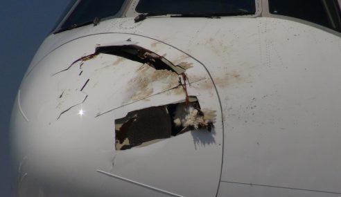 Pesawat Singapore Airlines 'Diserang' Burung