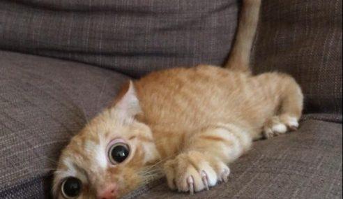 Baca! 13 Tips Berguna Dalam Hidup Daripada Kucing