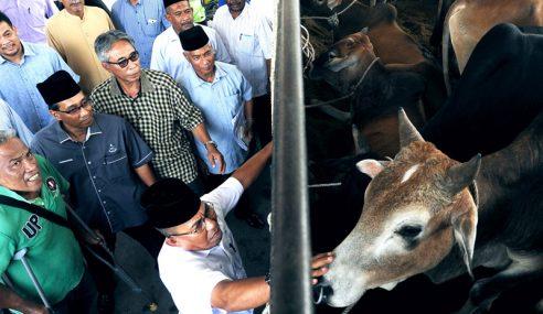 Najib Serah 539 Lembu Korban Untuk Daerah Pekan