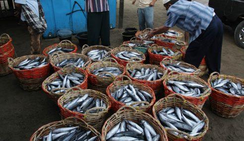 Harga Ikan Tongkol Meningkat Menjelang Hari Raya Aidiladha