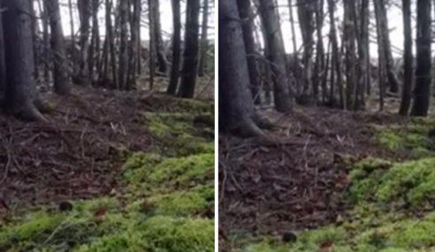 Video: Tanah Hutan Kanada Bernafas Macam Paru-Paru