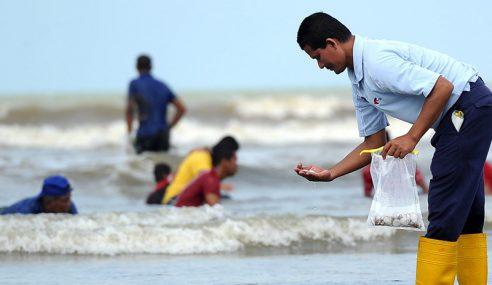 Pakar Nafi Ribuan Kerang Di Pantai Petanda Tsunami