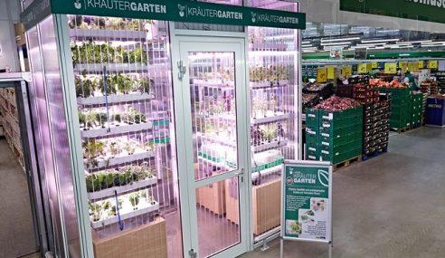 Unik! Pasar Raya Tanam 'Sayuran Segar' Dalam Premis