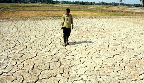 El Nino: MARDI Tangguh Jadual Penanaman Padi