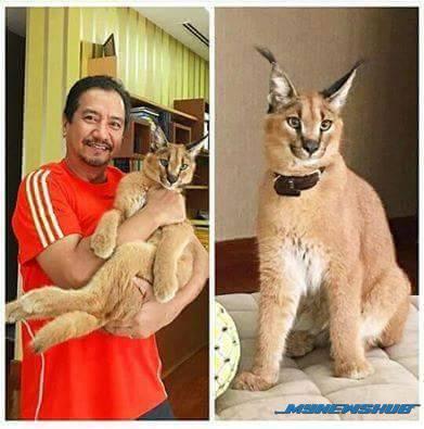 Gambar Sultan Mizan Dukung Kucing Eksotik Jadi Viral