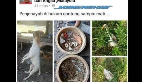 Polis Bantuan Gantung Anjing Sampai Mati Dikecam