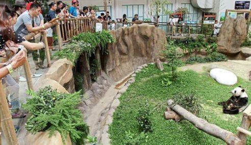 Zoo Rancang Masa Depan Pusat Pemuliharaan Panda