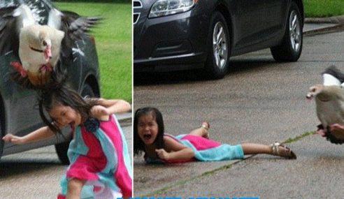 Gambar Budak Diserang Angsa Jadi Viral
