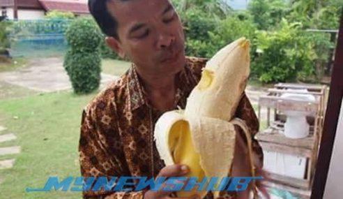 Pisang Raksasa Di Indonesia, Sebiji Makan Tak Habis!