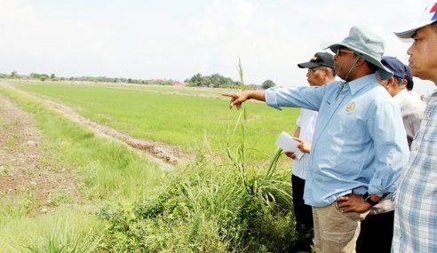 Mohon Beri Subsidi Pengeluaran Padi Kepada Petani Terjejas