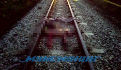 Tidur Atas Landasan, Lelaki Berkecai Digilis Keretapi