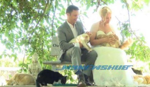 Ribuan Kucing Jadi Tetamu Majlis Perkahwinan