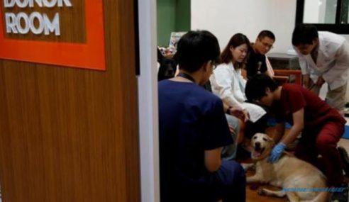 Pertama Di Dunia, Taiwan Buka Pusat Derma Darah Anjing