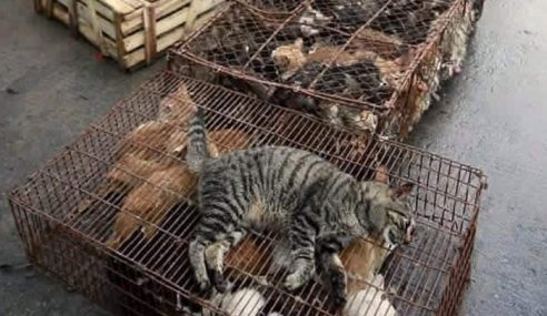 Kucing Jalanan 'Dilupuskan' Kejam Di Putrajaya