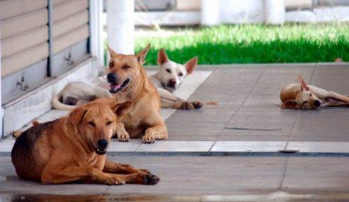 Aduan Mengenai Anjing Liar Di Selangor Meningkat