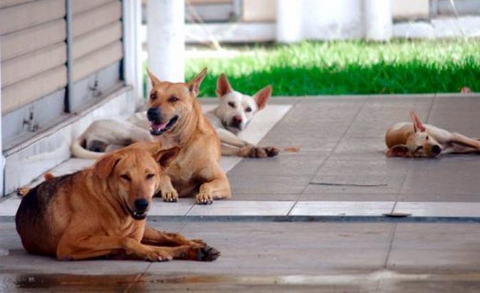 Aduan Mengenai Anjing Liar Di Selangor Meningkat Mynewshub