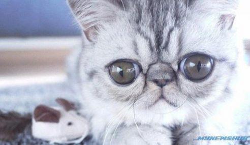 Pelik!!! Kucing Ini Tak Pernah Pejam Mata Masa Tidur