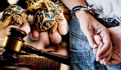 Lelaki Didakwa Simpan 27 Kura-Kura Tanpa Permit Khas