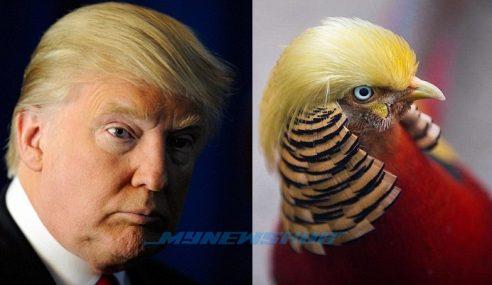 Burung Ini Miliki Gaya 'Rambut' Seperti Trump