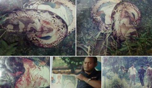 Kisah Lelaki Ditelan Ular Sawa Di Segamat Pada 1995