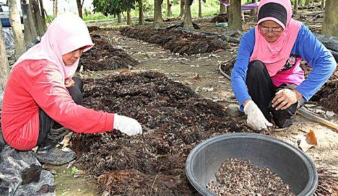 Jabatan Pertanian Basmi Kera Pemusnah Tanaman