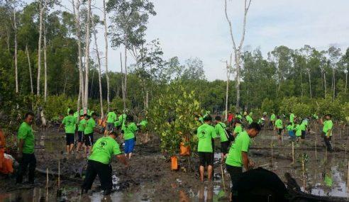 TLDM Tanam 15,000 Pokok Bakau Pelihara Ekosistem