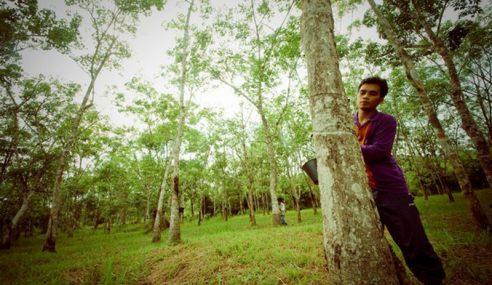 Malaysia Mengambil Beratus Penoreh Getah Dari Kerala
