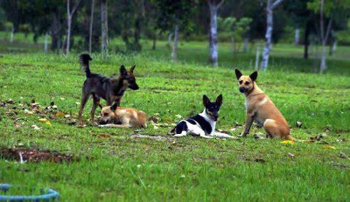 MPS Teliti Tindakan Lebih Tegas Pemilik Anjing