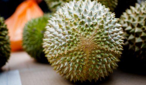 Petani Diminta Tanam Klon Durian Bermutu Tinggi