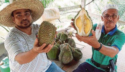 Durian Kebun Cikgu Wei Lagi Hebat Malah Murah