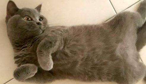 Kucing Baka Mahal Mati, Vet Tak Mahu Tanggungjawab