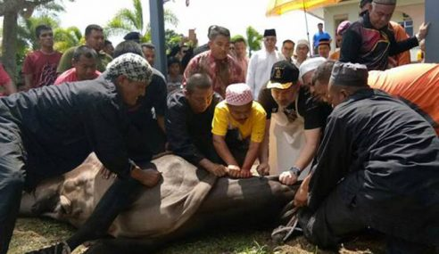 Sultan Muhammad V Berangkat Ke Majlis Korban