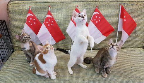 Warga Emas Ternak Kucing Untuk Dijual Didenda