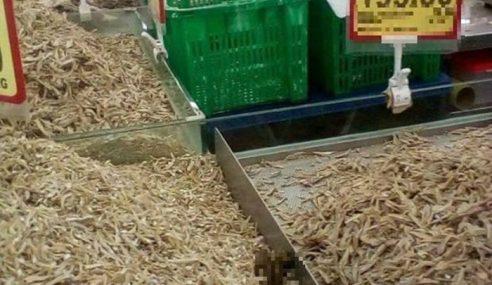 Pasar Raya Tak Bersih, Ada Najis Anjing?