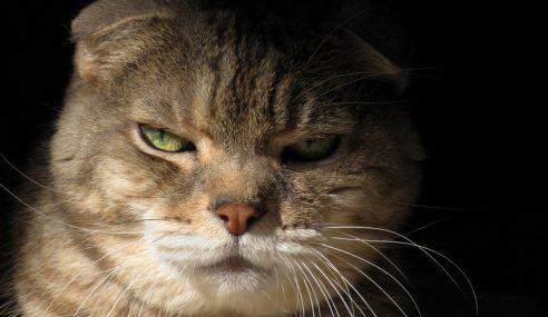 Kucing Liar 'Suspek' Cubaan Bunuh Wanita