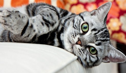 Pesta Kucing Seremban Pada Jumaat & Sabtu
