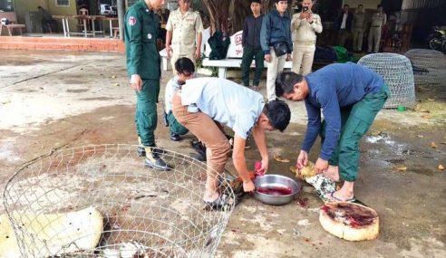 Mahkamah Arah Hukuman Mati 92 Ekor Ayam Jantan